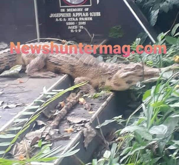 Wonders Shall Never End: Residents Of Chiraa Lives In Fear After Finding A Crocodile At The Cemetery (Watch Video)